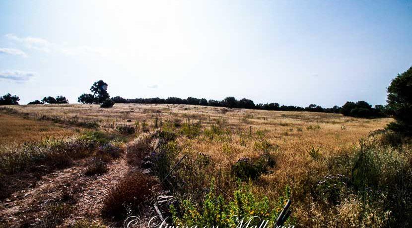 LOM0008-16 Blick über Grundstück
