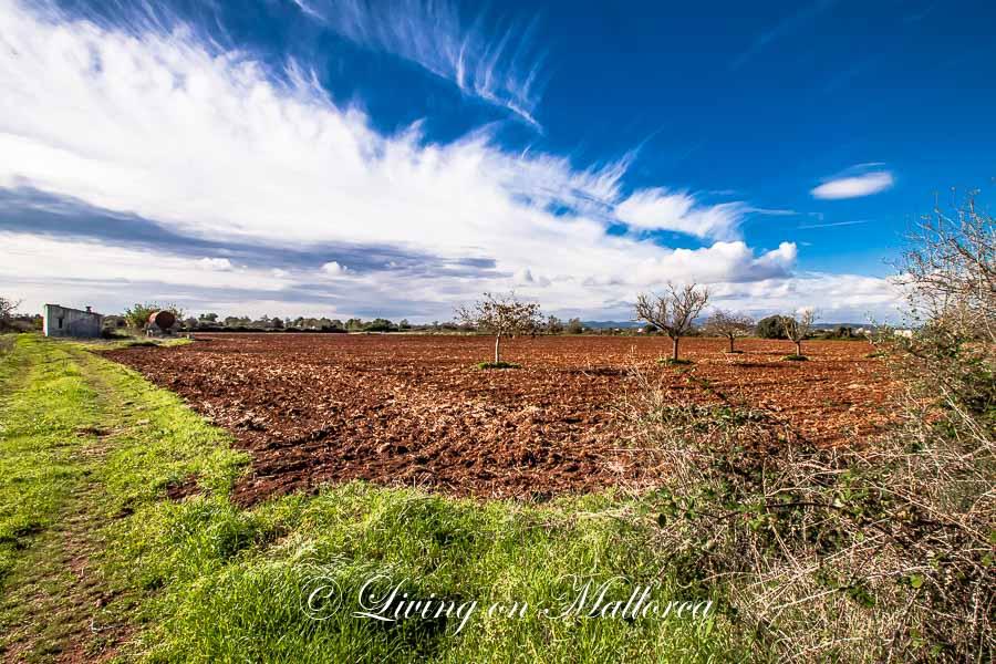 Finca plot near Felanitx, quiet area, with panoramic view